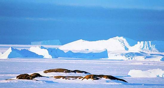 """超-50℃的极寒南极洲,徐工装载机演绎""""冰雪奇缘"""""""
